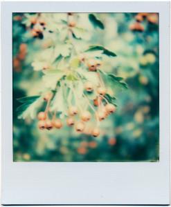 Pola-Beeren in Farbe